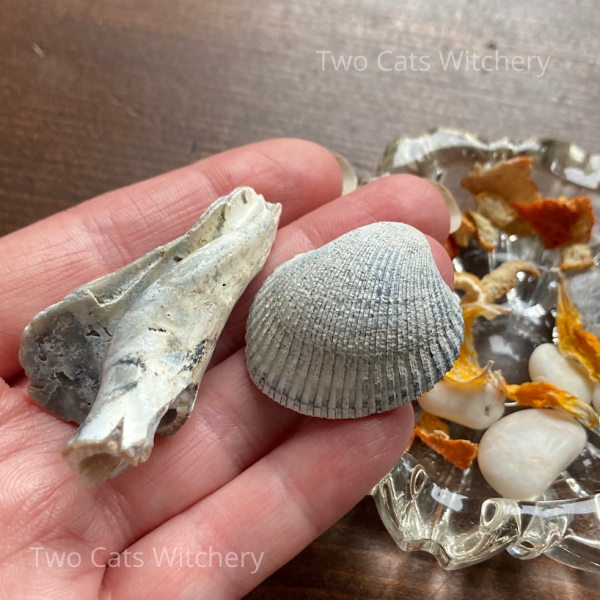 sea shells in witchcraft