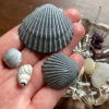 sea shells for witchcraft magick