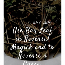 bay_leaf_witchy_tip.jpg