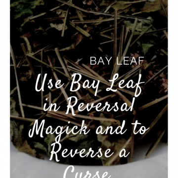 Bay Leaf in Kitchen Witchery  Magick