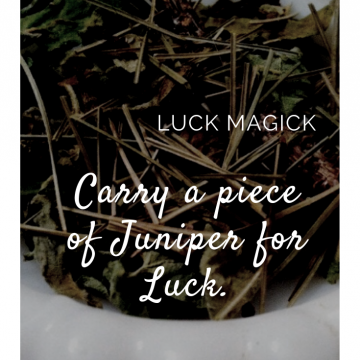 Juniper for Luck / Kitchen Witchery  Magick